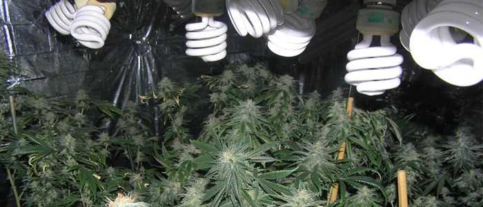 choose a grow tent